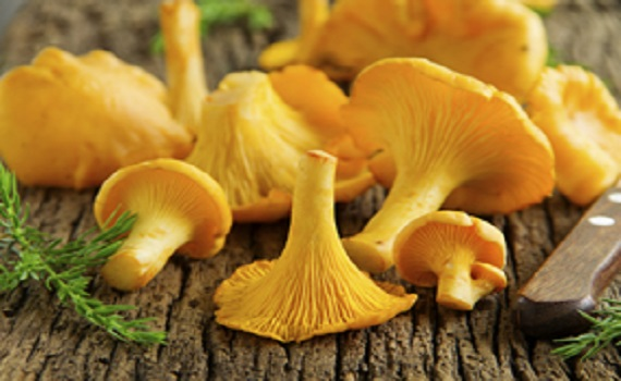 comparative species chanterelle mushroom